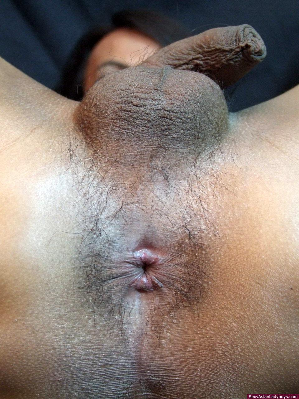 Busty Abd Starved Tranny Sucks Huge Cock